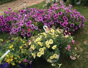 PlantSaleFlowers-webpost